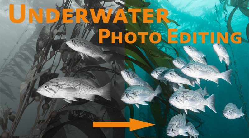 essential lightroom editing for underwater photographers