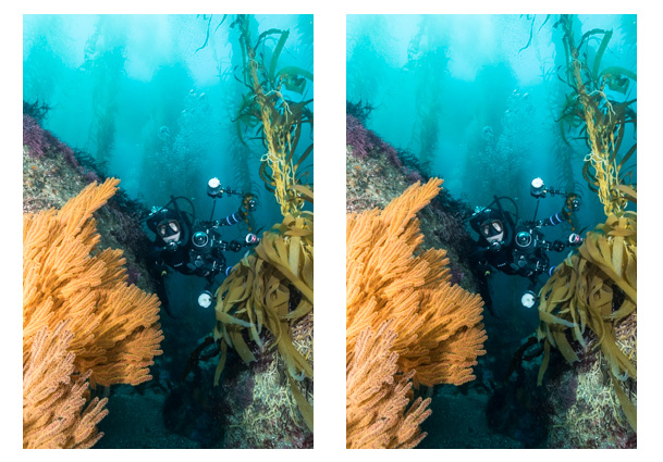 Lightroom blacks slider for underwater photos.