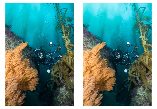 lightroom-lens-corrections-underwater-photography