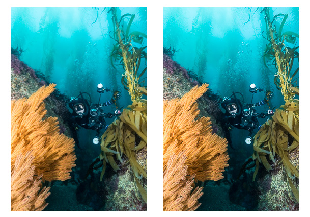 sharpening-underwater-photos