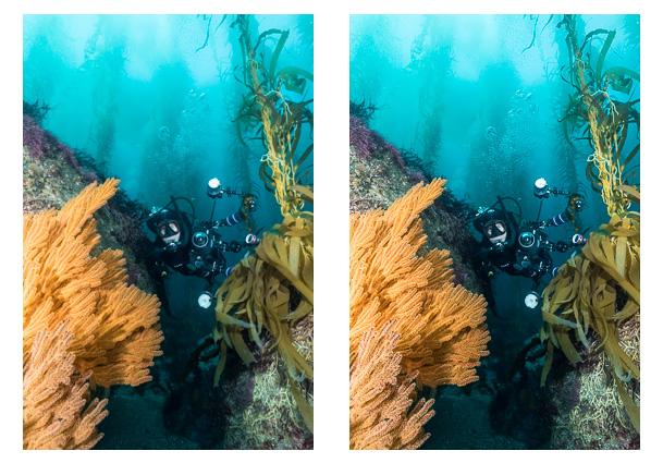 sharpening-underwater-photos