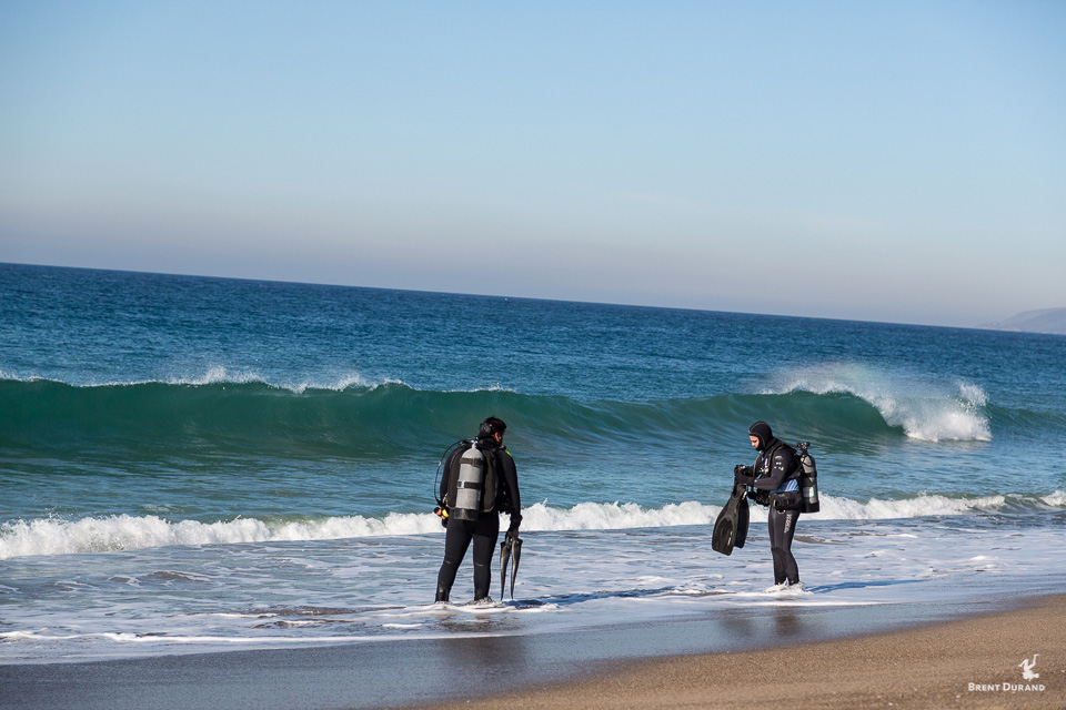 beach divers in malibu