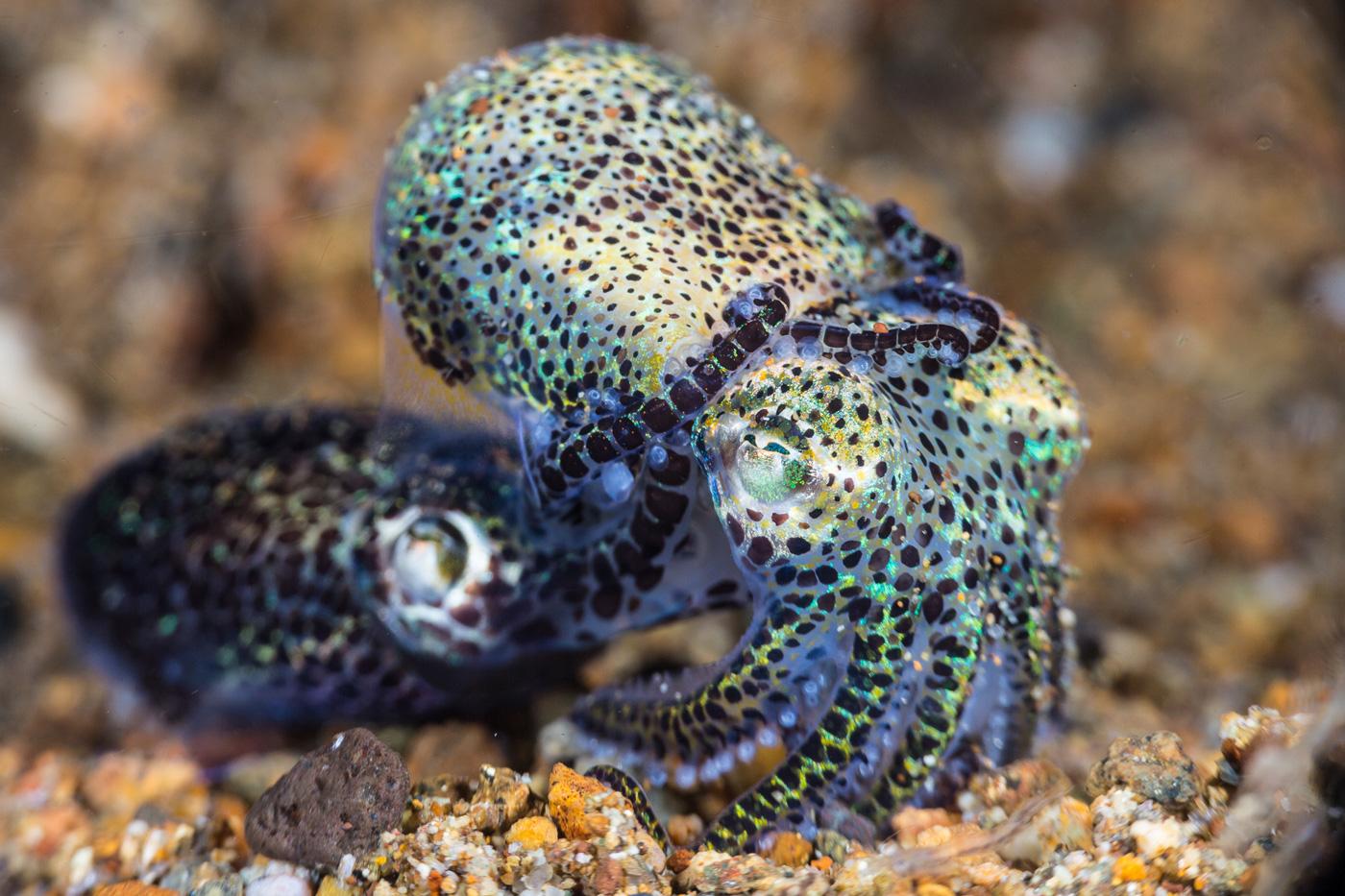 durand underwater macro behavior