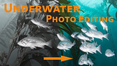5 Tips for Editing Underwater Photos