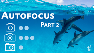 autofocus video miniseries - part 2