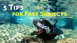 Fast Subjects Photo Tips