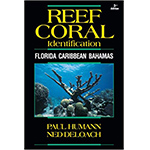 Coral Reef Identification, Florida, Caribbean, Bahamas Book