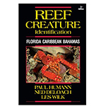 Reef Creature Identification, Florida Caribbean, Bahamas Book