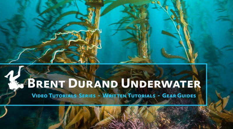 Brent Durand Underwater Logo 2
