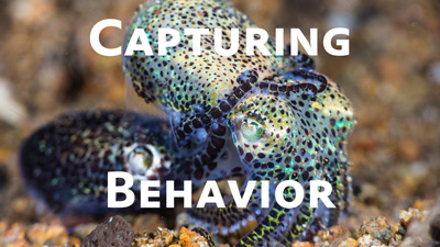 How to Capture Underwater Macro Behavior Photos thumbnail
