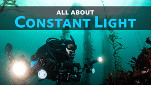 constant light photography underwater