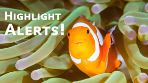 using in-camera highlight alerts