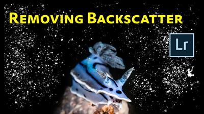 How to Remove Backscatter in Lightroom
