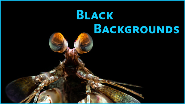 How to Create Black Backgrounds Underwater