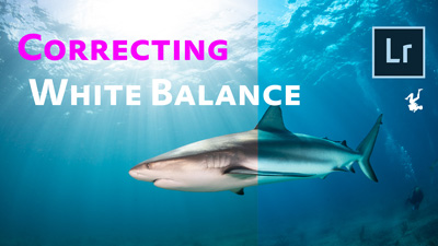 How to Correct Underwater White Balance in Lightroom