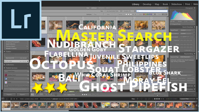 Using Lightroom Search for Photos