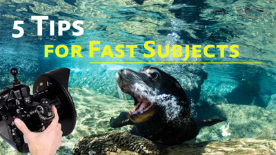 Photo Tips for fast subjects underwater