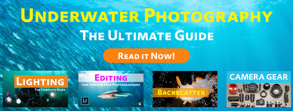 Ultimate Guide to Underwater Photography button