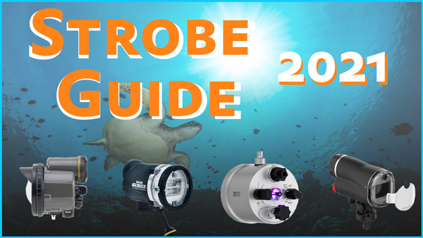 2021 Underwater Strobe Comparison & Guide promo