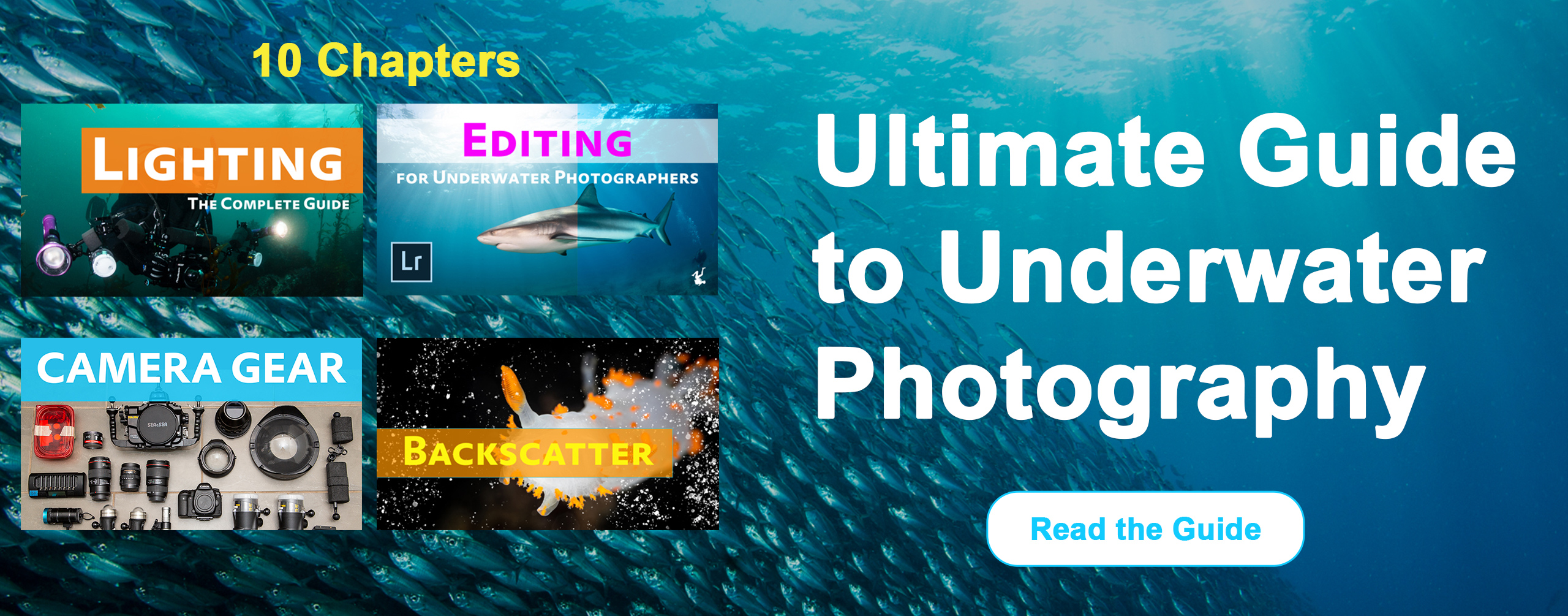 Ultimate Guide to Underwater Photography hero